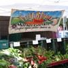 Organic greens for sale